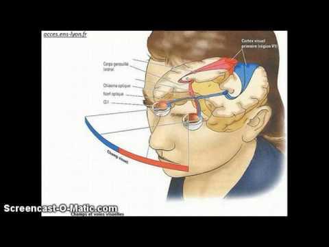 Comme retirer vite les oedèmes sous les yeux après les larmes pour un matin