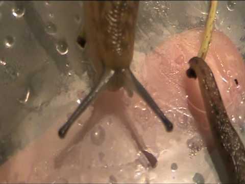 Quello che i parassiti possono essere in corpo umano video