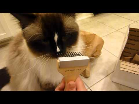 Best Cat Brush for a Ragdoll Cat Arrives for Review! - ねこ - ラグドール - Floppycats