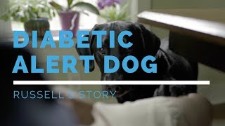 Diabetic Alert Dog: Russell's Story