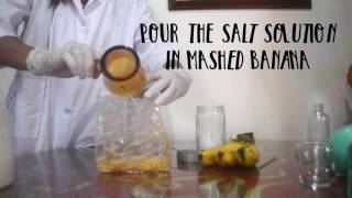 Extracting DNA from Banana
