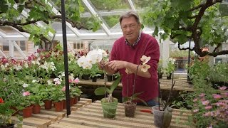 Looking after orchids