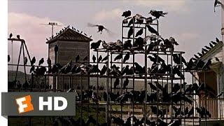 The Birds Song