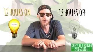 FLIPPING YOUR WEED TO FLOWER - Episode 10 (Growing Weed to Bud from Seed)