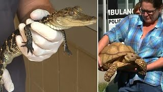 Alligators and Snakes Among Dozens of Exotic Animals Found in Pennsylvania Home
