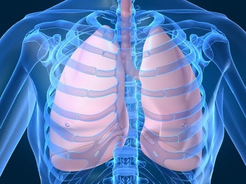 Respiratory System  for Kids (Breathing) by www.makemegenius.com