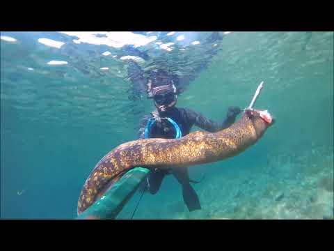 La pesca su occhio video r