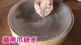 猫用爪研ぎを2つ買ったのですが😆【♀猫こむぎ&♂猫だいず】 | Kholo.pk