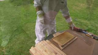 From Langstroth To Top Bar Hive Fast And Easy!