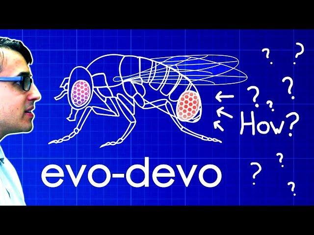 Video Pronunciation of Devo in English