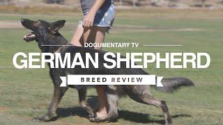 GERMAN SHEPHERD BREED REVIEW