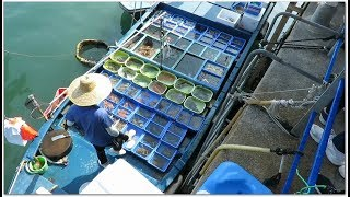 浮動的海鮮市場 西貢香港 Floating Seafood Market at Sai Kung Hong Kong