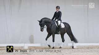 Zouzo, prêt pour son 1er concours en France
