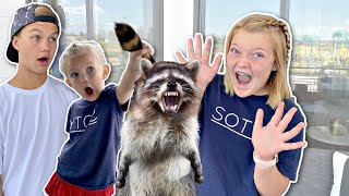 Raccoon ATTACK!! We Have SURPRISE Visitors