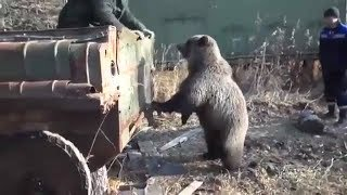 Вахтовики кормят медведя.