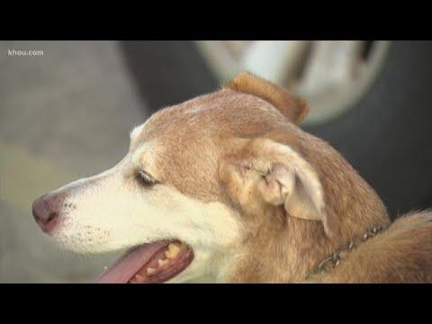 Homeless men find stolen dog from Dickinson