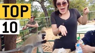 animale faze cu maimute
