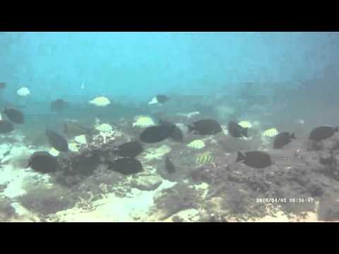 Lots wonderful fish! Scuba diving Sri Lanka, Trincomalee, Taprobane Divers