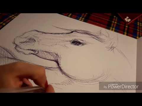 Drawing Horse ~ Bic Pen/ Disegno cavallo a penna
