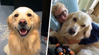 Golden Retriever's Morning & Night Routines (SCS #168)