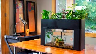 Aquaponics- the future of farming?