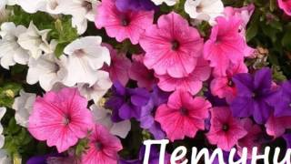 Клумбы из однолетников ля непрерывного цветения видео