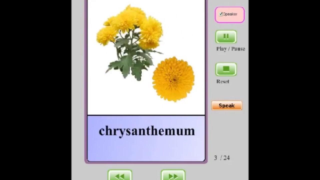 Audio Flashcards for Kids - Flowers (II)