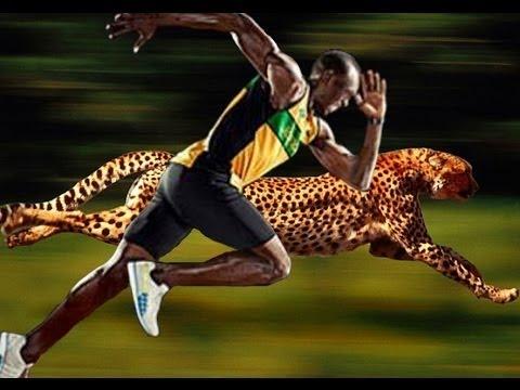 Usain Bolt Vs Cheetah