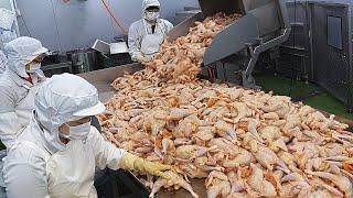 생생한 현장! 여름성수기의 통닭가공 공장과 치맥용 치킨3종(후라이드,양념,수비드통닭) /Chicken Factory and Fried Chicken