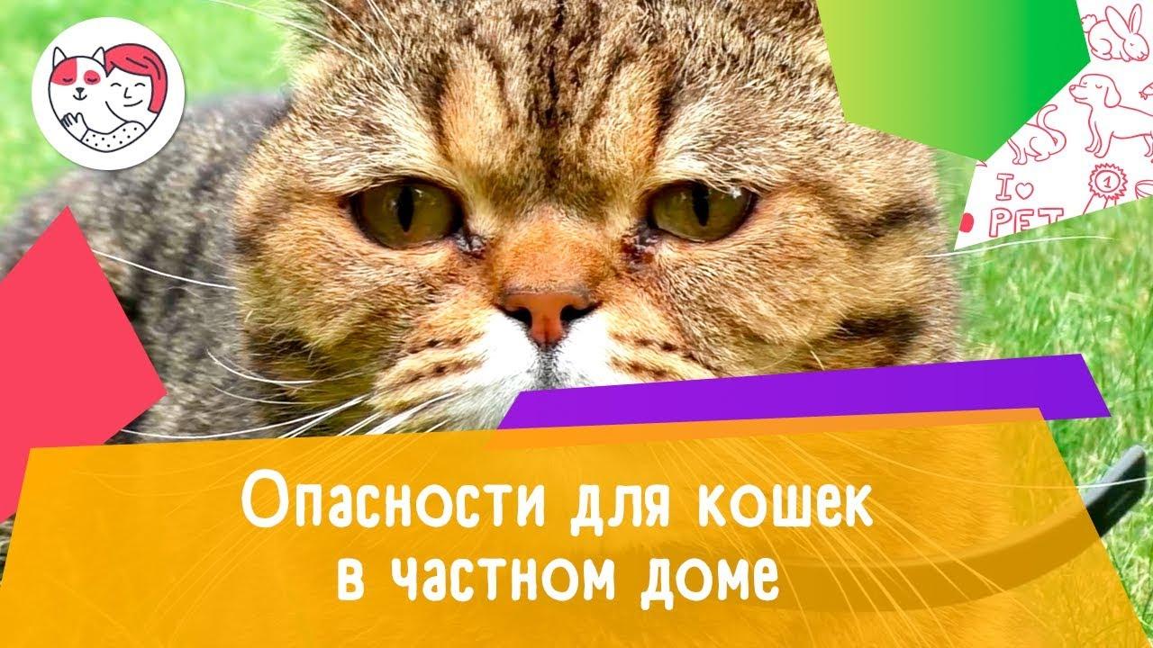5 опасностей для кошек в частном доме