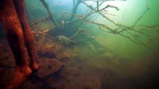 Платная рыбалка на щелковском доломитовом карьере