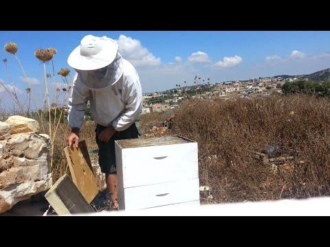 пчеловодство . пчёлоудалитель квэбэк . первое испытание .