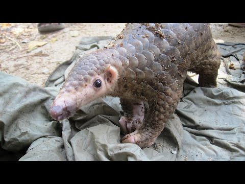 Help Save the Most Trafficked Mammal in the World