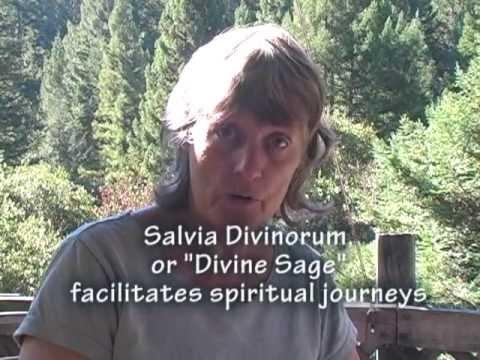 Distilling Divine Sage Grappa