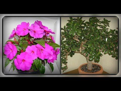 Комнатные растения, которые не боятся сквозняков