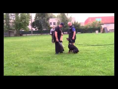 immagine di anteprima del video: Golubaya Krov ERMIONE  con Marko Koskensalo 09-2012
