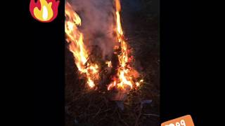 Зажгли огромный костер  Ананас TV