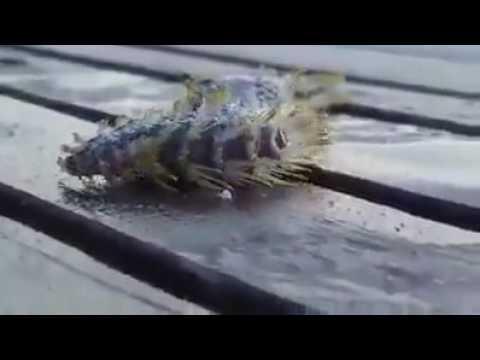 DERINDURMAZ's Video 141484486924 yg1ZABJr9Iw