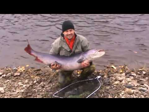 Video che pesca su uno squalo nellinverno