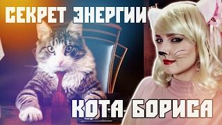 Кто кот Борис на самом деле и в чём секрет его энергии?