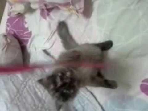 ถ้าหนอนไม่ปล่อยให้ลูกแมว