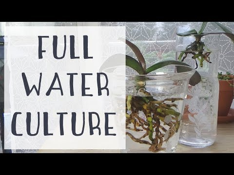 Hydroculture : Premier bilan & Transition vers la Full Water Culture