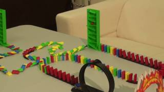 Kili Senegal Parrot - Parrot Domino Rube Goldberg Machine