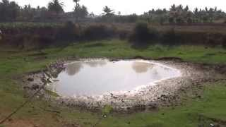 preview picture of video 'A pond with Lapwings birds in a irrigation field Valvettithurai. தரவைக்குளம், கொம்மந்தறை'