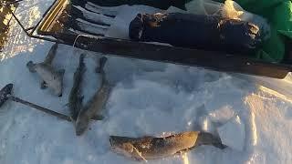 Отличная зимняя рыбалка 22.11.2017