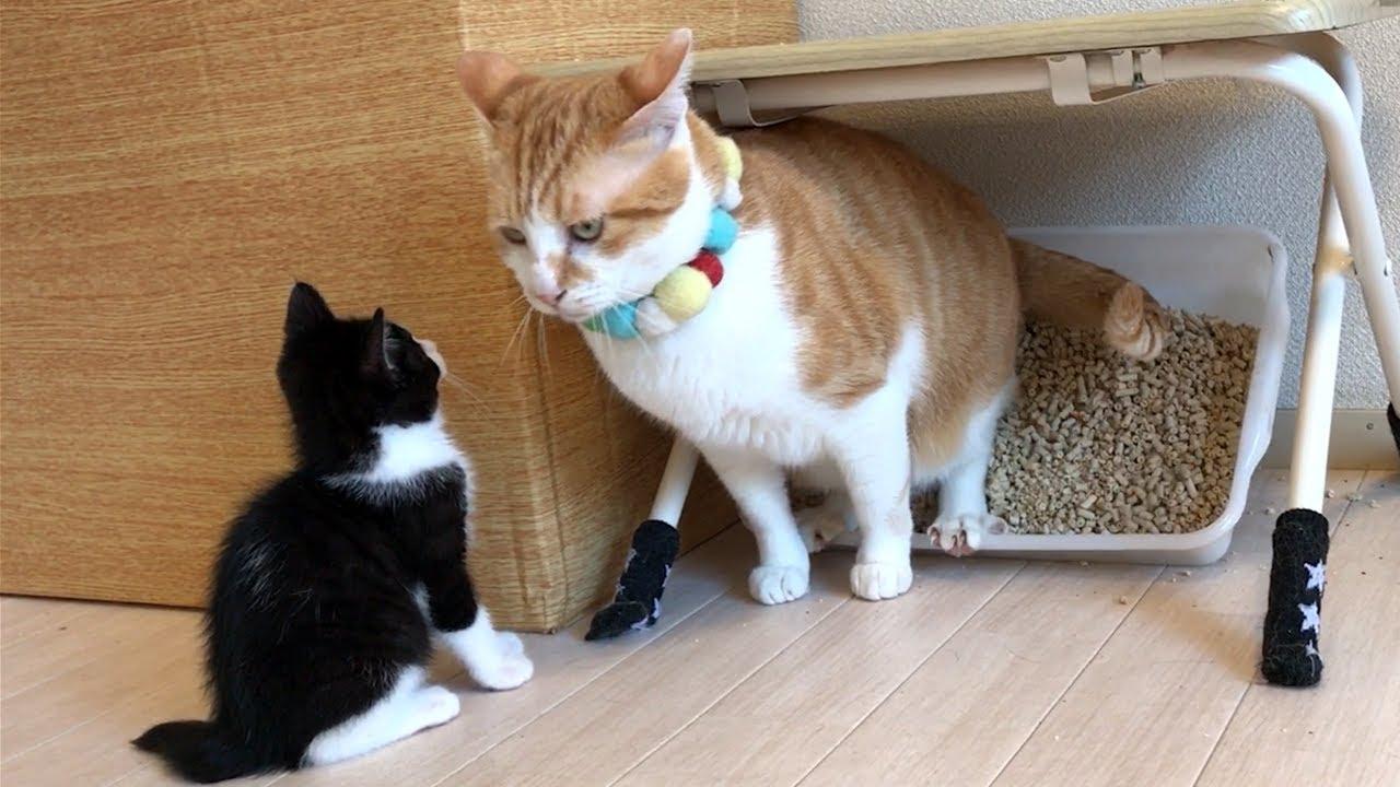 【大惨事】自分のトイレを破壊されてしまった子猫