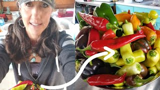 HOW TO FERMENT Any VEGETABLE! Get More NUTRITION