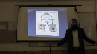 הלכות נידה הקדמה 1-מערכת הרביה האנושית. הרב אריאל אלקובי שליט''א.