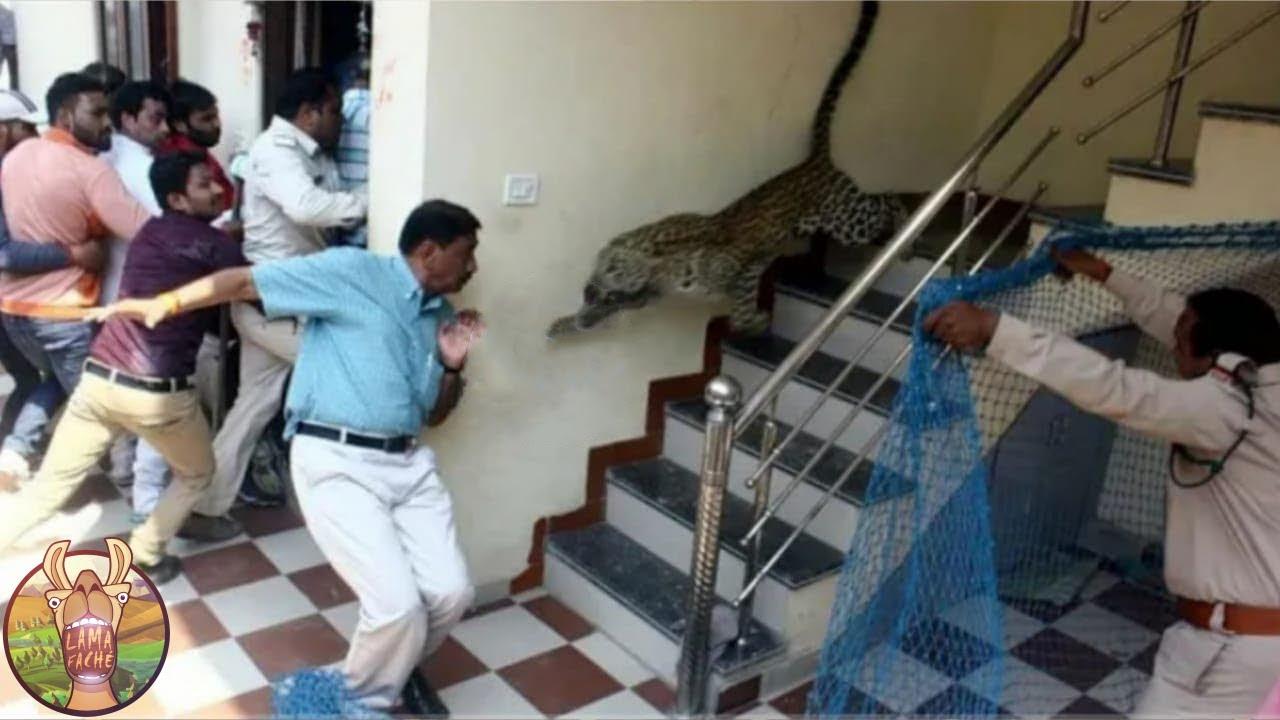 Ce Tigre A Attaqué Les Gens Dans Une École !