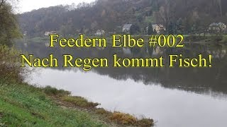 preview picture of video 'Let´s Fish Feedern in der Elbe bei Pirna im Strom #002 Nach Regen kommt Fisch! (HD)'